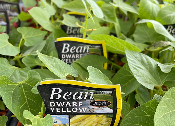 Bean - Dwarf yellow punnet