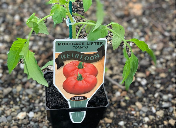 Tomato - Mortgage Lifter ADVANCED