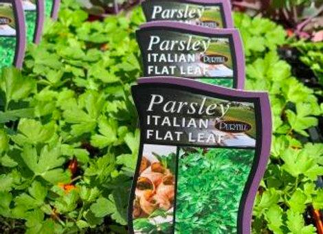 Parsley - Italian Flat Leaf punnet