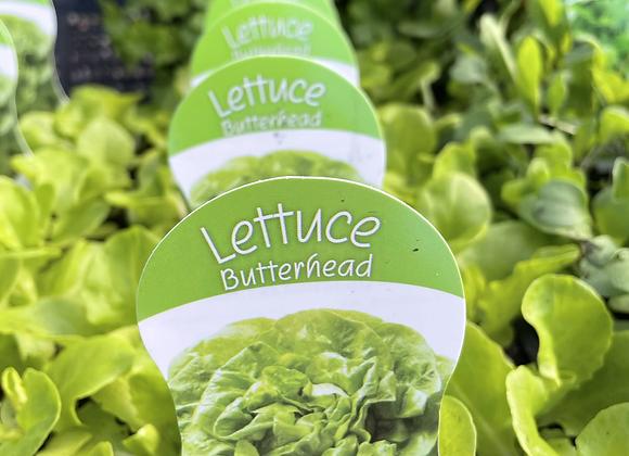 Lettuce - Butterhead punnet