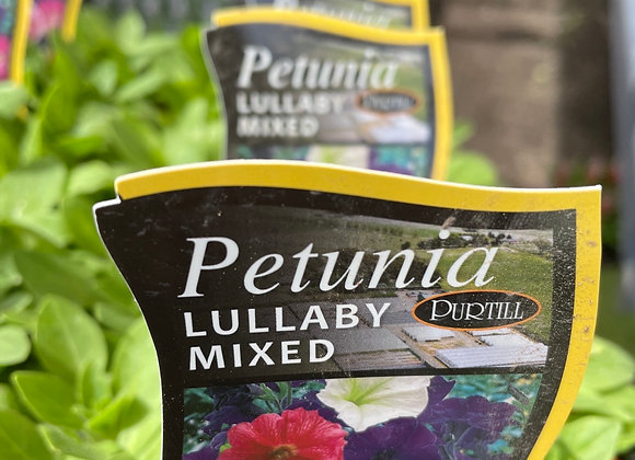 Petunia - Lullaby mix small flowers punnet
