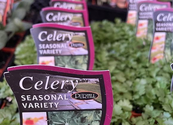 Celery - punnet