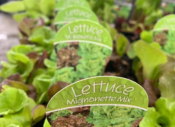 Lettuce - Mignonette Mix punnet