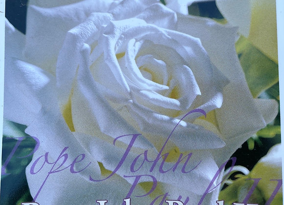 Bush Rose -  Pope John Paul II 20cm pot