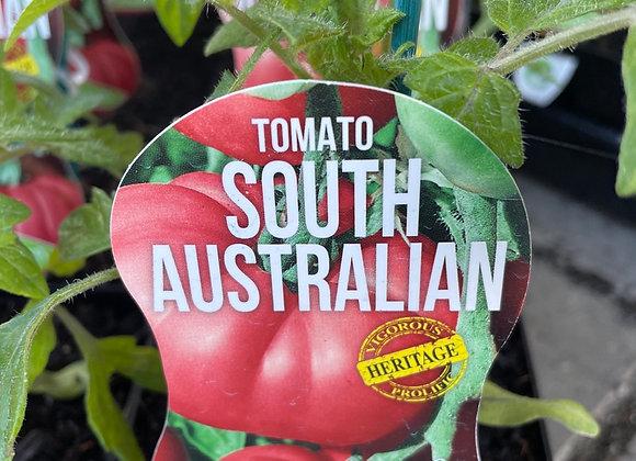 Tomato - South Australian ADVANCED