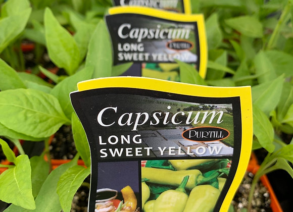 Capsicum - Long Sweet Yellow punnet