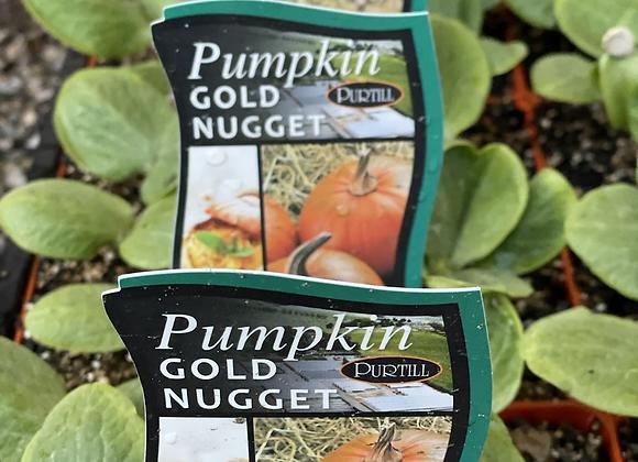 Pumpkin - Gold Nugget punnet