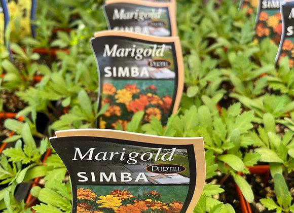 Marigold -  Simba punnet