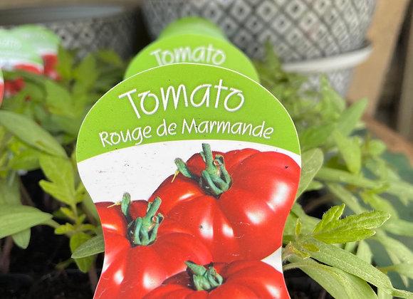 Tomato - Rouge de Marmande punnet