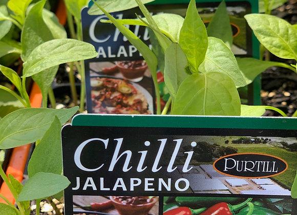 Chilli - Jalapeno punnet