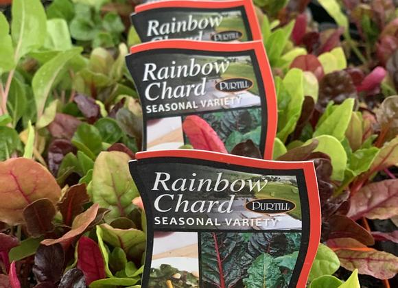 Silverbeet - Rainbow chard punnet