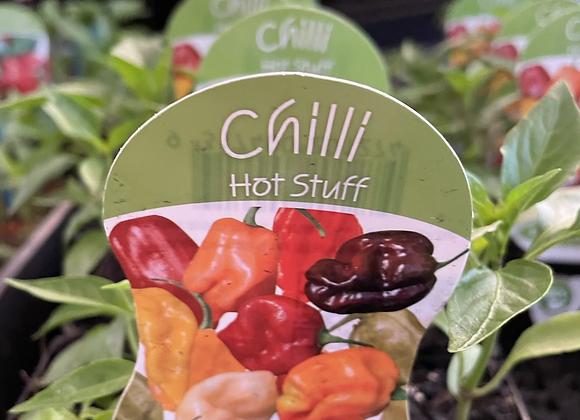 Chilli - Hot Stuff punnet