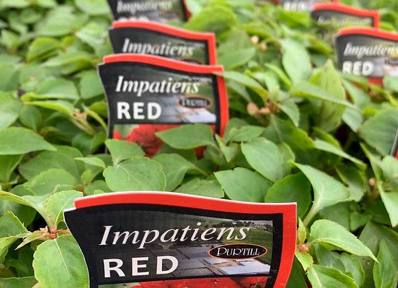 Impatiens -  Red punnet