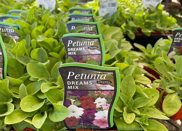 Petunia - Dreams Mix  punnet