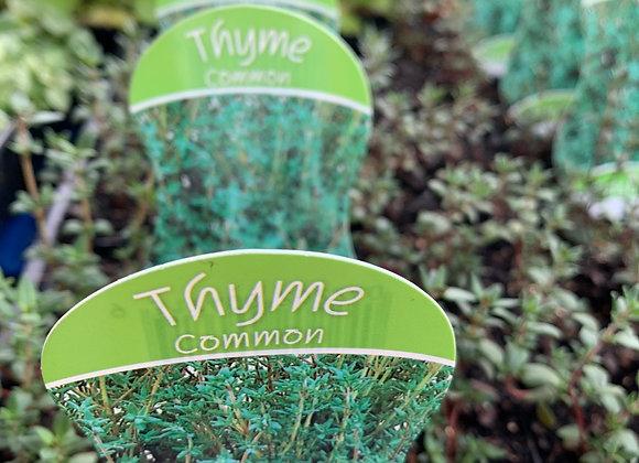 Thyme - punnet