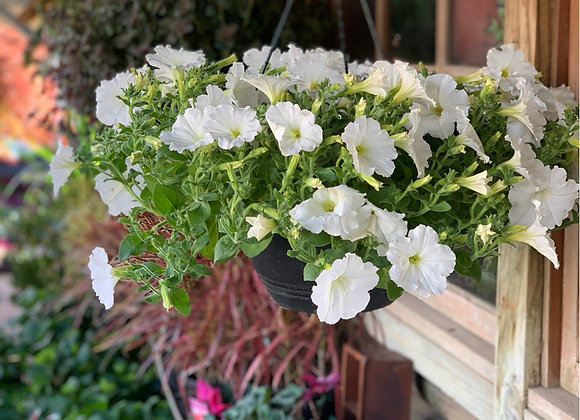White craze trailing petunia hanging basket