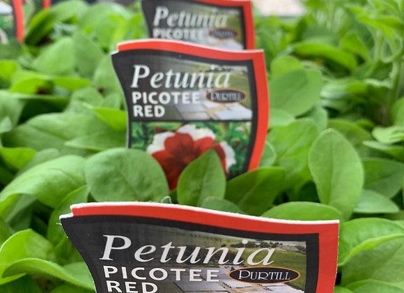 Petunia - Picotee Red