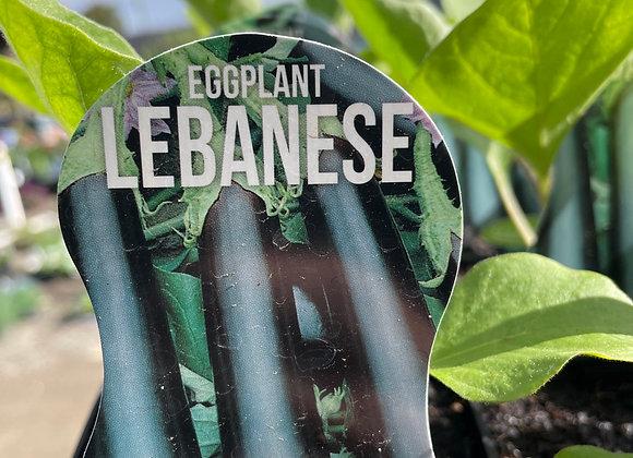 Eggplant - Lebanese ADVANCED