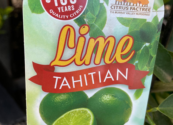Lime - Tahitian