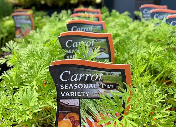 Carrot - punnet
