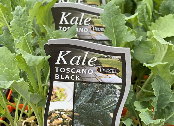 Kale-Toscano Black