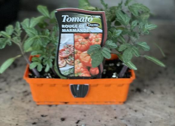 Tomato - Rouge de Marmande Italian style
