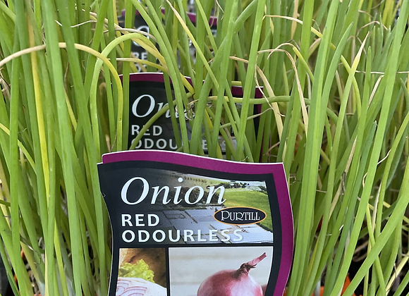Onion-Red Odourless
