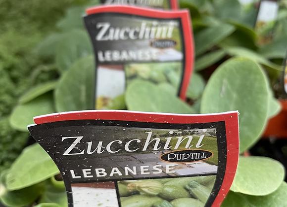 Zucchini - Lebanese punnet
