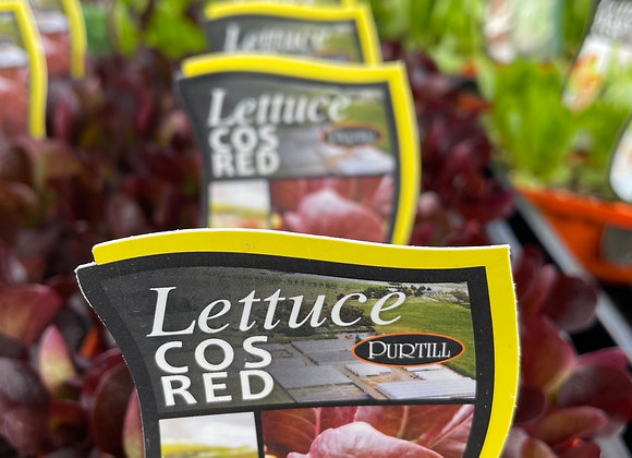 Lettuce - Cos Red