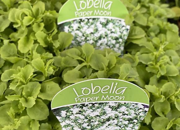 Lobelia - Paper Moon