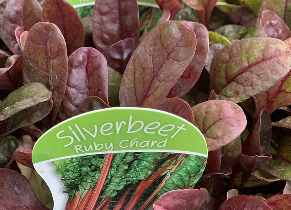 Silverbeet - Ruby chard punnet