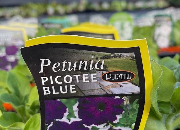 Petunia - Picotee Blue punnet