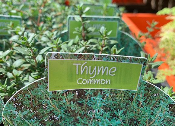Thyme 100mm pot