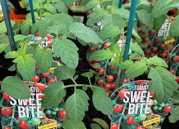 Tomato - Sweet Bite ADVANCED