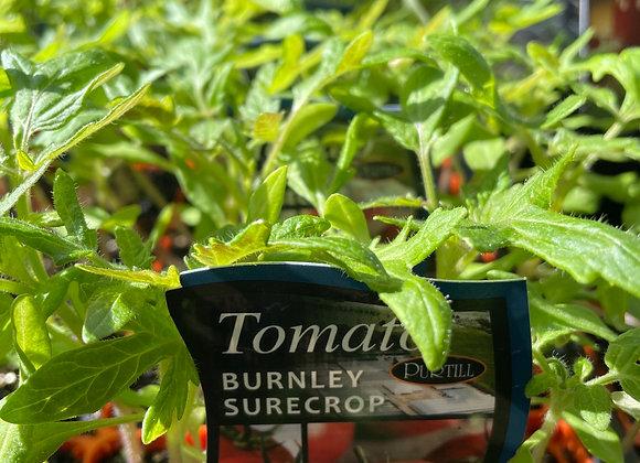 Tomato - Burnley Surecrop punnet