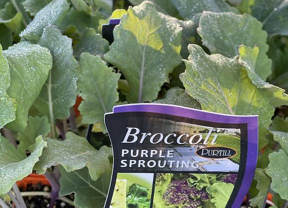 Broccoli-Purple Sprouting