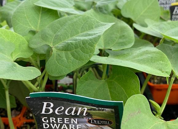 Bean - Green Dwarf