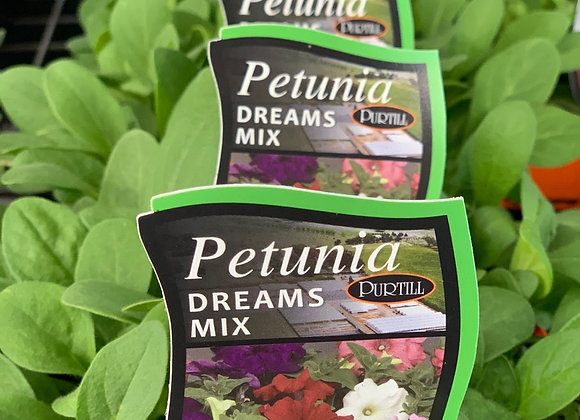 Petunia - Dreams Mix punnet