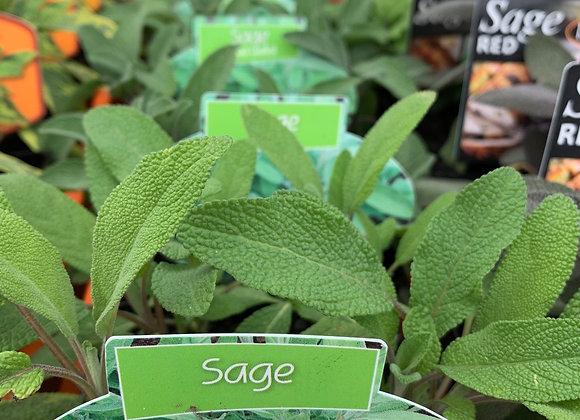 Sage 100mm pot