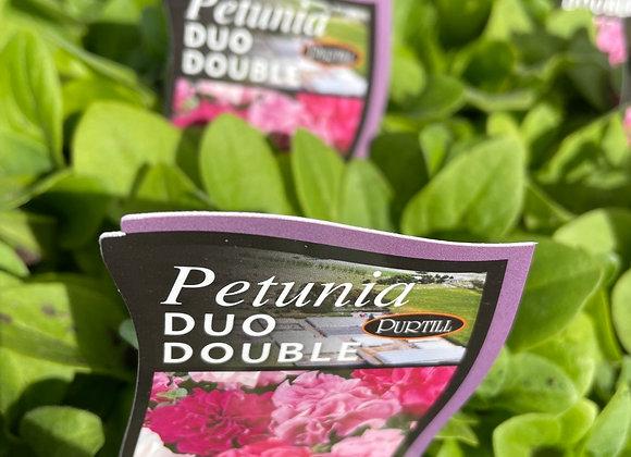 Petunia - Duo Double Mix  punnet