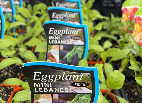 Eggplant - Mini Lebanese