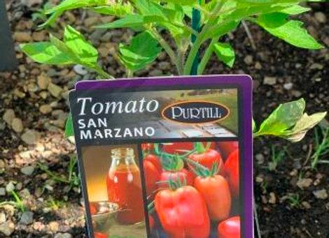 Tomato - San Marzano ADVANCED