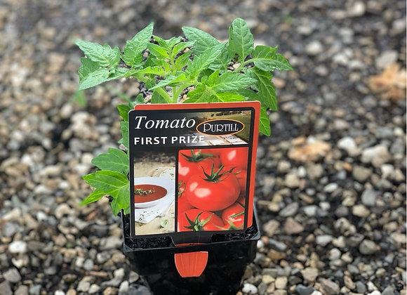 Tomato - First Prize ADVANCED