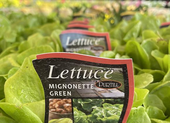 Lettuce Mignonette Green  - punnet
