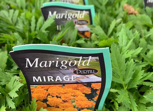 Marigold - Mirage punnet