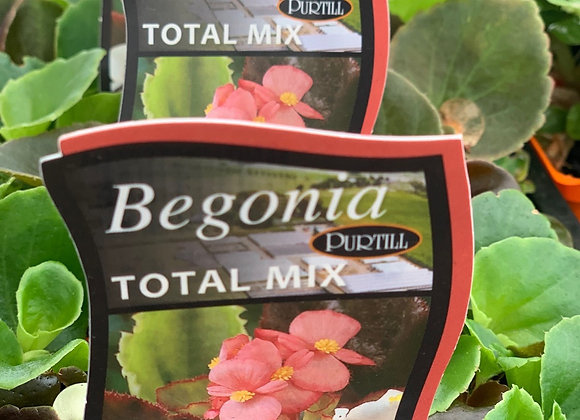 Begonia - Total Mix punnet