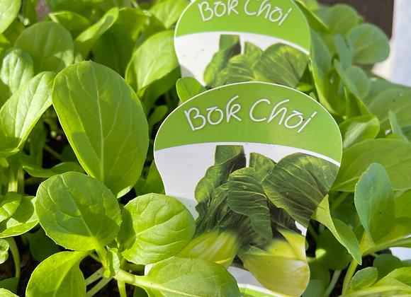 Bok Choi