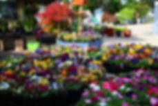 bloomers 3_c.jpg
