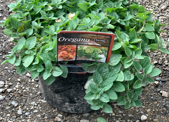 Oregano ADVANCED