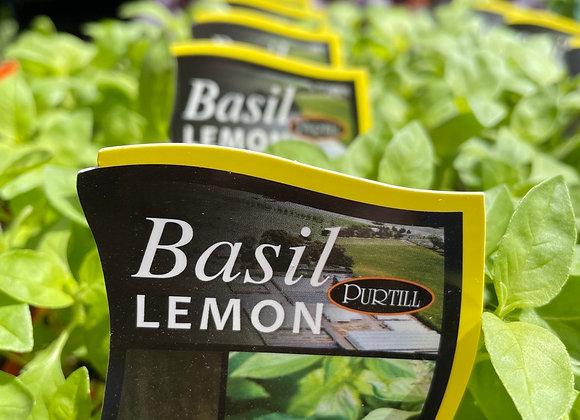 Basil -  Lemon punnet